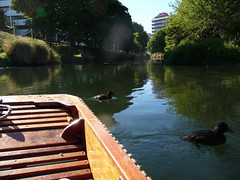NZ: Punting on the river Avon