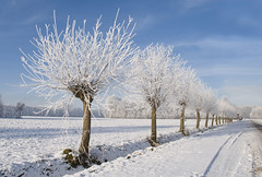 (raymnd) Tags: trees winter white snow treeline snowscape winterscape winterscene mywinners abigfave platinumphoto theunforgettablepictures platinumheartawards absolutegoldenmasterpiece