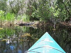 Alligator (Frank Kehren) Tags: canon georgia kayak alligator swamp okefenokee canonpowershots45