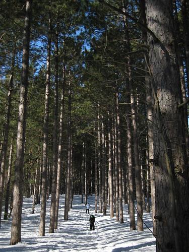 Pinhey Forest ski