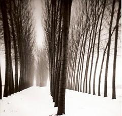 Trees. (candido baldacchino) Tags: camera trees bw analog holga picnik holga120gfn autaut candidobaldacchino