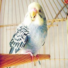 Mister Cato (hey cocodrile) Tags: pet animal giant small ave pajaro gigante mascota pequeo cato catito