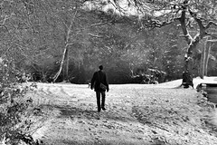 walking in the snow middleton park leeds (jasonbilbo) Tags: park christmas xmas uk trees winter england white lake snow black tree ice magazine pond walk leeds awsome freeze advert miggy middleton brochere aplusphoto