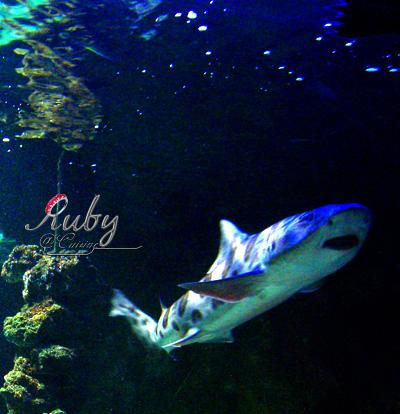 Monaco_aquarium_shark