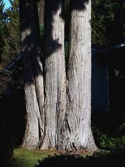 tresor (dmixo6) Tags: blue trees sky white canada green nature bc february dugg dmixo6