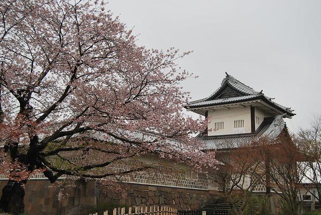 Sakura en el Castillo de Kanazawa