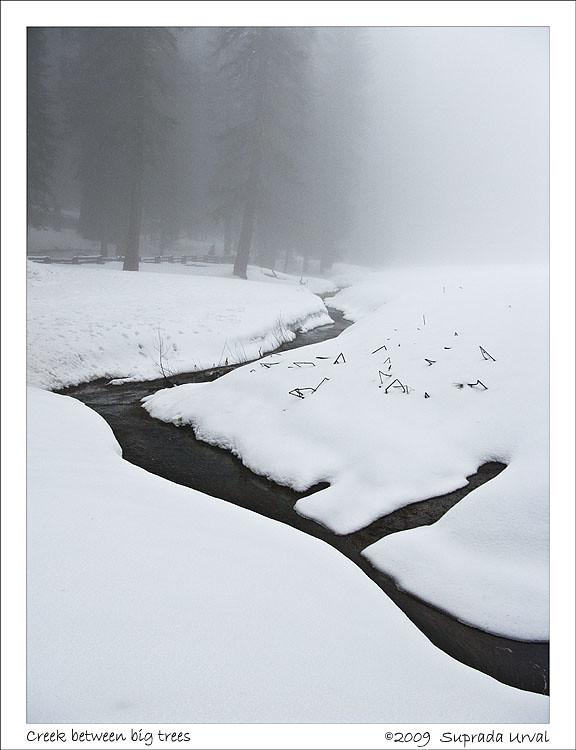 Creek between big trees