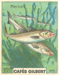 gilbert poissons 5