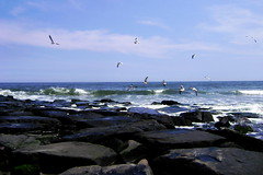 Ocean City seascape (moocatmoocat) Tags: ocean new city sea seagulls black water waves stones jetty jersey anawesomeshot