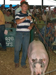 portage.09.hog show (Farm and Dairy) Tags: county ohio champion reserve grand portage countyfair hog 4h ravenna holstein randolph ayrshire ffa portagecounty randolphfair