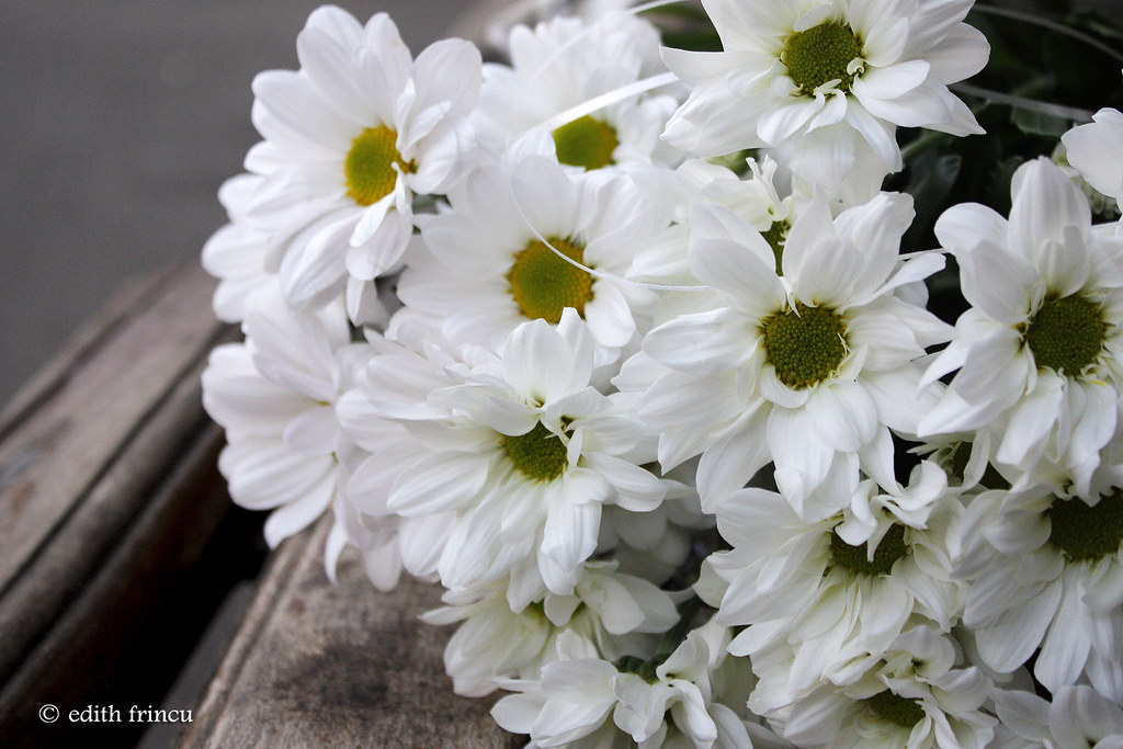 the most gorgeous white flowers 1