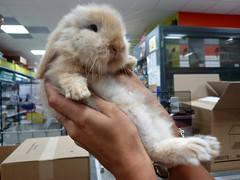 Rascal baby! - Baby birba! (SissiPrincess) Tags: pet bunny mouth fur nose eyes hands mani occhi paws petshop bocca pelo naso coniglietto zampe supershot animaletto platinumheartaward rubyphotographer 100commentgroup flickraward lovely~lovelyphoto expressyourselfaward negoziodianimaletti