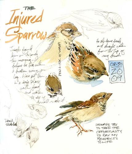 Injured Sparrow
