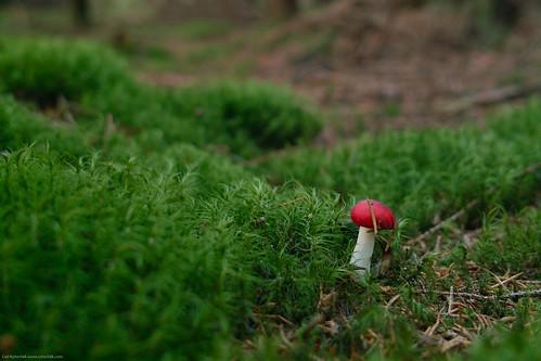 Mushroom at 15s f4