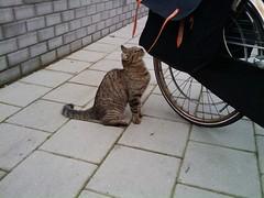 Kat bij de supermarkt - Vijfhuizen (westher) Tags: kat juli 2009 dier noordholland haarlemmermeer vijfhuizen felidae feliscatus