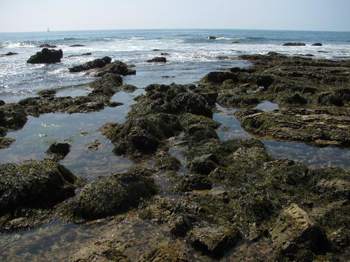 rock pools @ crystal cove