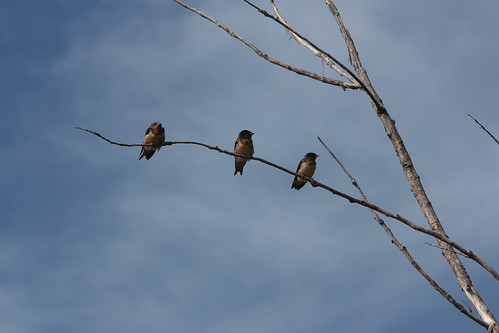 Three unknown birds