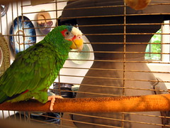 bird parrot cage perch pepito
