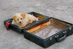 DIZ0157 (artzubi) Tags: dogs euskalherria txakurrak gipuzkoa alkiza zirkua cirquedefrance