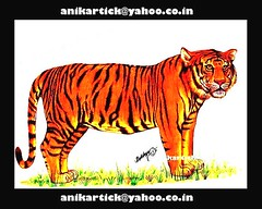 ART of TIGER - Chennai Animation Artist ANIKARTICK (KARTHIK-ANIKARTICK) Tags: portrait india art illustration painting sketch artist animation chennai tamilnadu pencilsketch southindia pencilart animator indianart portraitartist animationmentor artartart landscapeartist illustrationart kartick 2danimation indianartist artistartist arenaanimation chennaiartist animationartist anikartick sijuthomas tamilnaduartist artistanikartick chennaianimation chennaianimator indiananimation chennaiart indiananimator mumbaianimation delhianimation puneanimation 2danimator thomasphoenix 2danimationartist 2danimationskerches