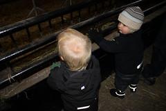 Gusten och Frank tittar på får tillsammans