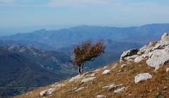 Solo (fabrizio64) Tags: picnic italia sentiero amici autunno colori cavalli lazio cima abruzzo bosco laquila vetta escursione faggi montisimbruini cimavallevona
