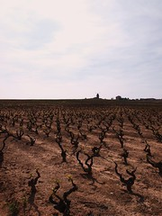 Moulin (hijadellechero) Tags: france wine vin vitaceae vignes vino chânes