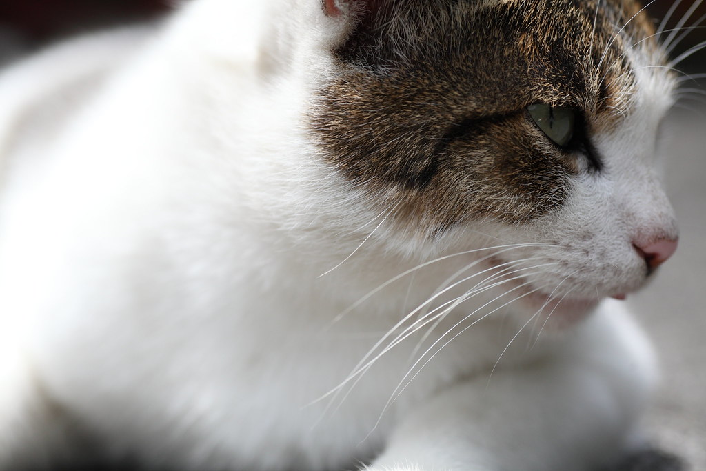 99/05/16-侯硐貓