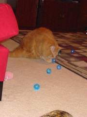 Jasper sizes up the new balls