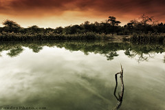 Kuwait Jurassic Park (A.alFoudry) Tags: park wood trees winter sky lake reflection tree water canon landscape eos mirror high angle wide wideangle full filter silence frame land 5d kuwait usm fullframe scape twigs effect 2009 tobacco ef 1740mm canonef1740mmf4lusm jurassic kuwaiti q8 cokinfilter abdullah  cokin  f4l canoneos5d  kuw q80  xnuzha alfoudry  abdullahalfoudry  foudryphotocom