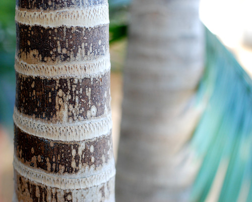 v botanical gardens 004