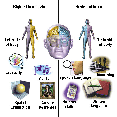 brain_function_hsf
