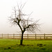 Leafless Tree with a Foggy Background by Steve G. Bisig