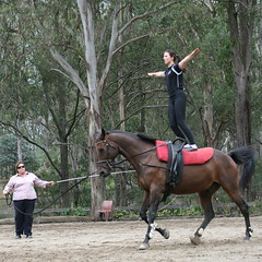 Vaulting demonstration ('hold on') Tags: horses entertainer equestrian equine vaulting