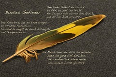 Buntes Gefieder / Colourful Feathers (Poet for Life) Tags: dedication poetry poem feather aunt dedicated tante gedenken feder widmung poempicture