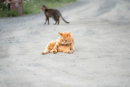 猫、背反:kitami2009-4