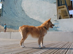Le Chien - Hossegor (Been Around) Tags: chien france french frankreich hossegor hund francais landes atlanticcoast aquitaine aquitanien