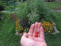 Well, hello, sweet baby tomatoes...