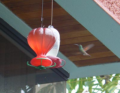 colibri et nectar.jpg