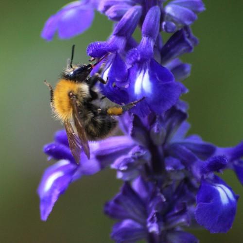 Jardin des Plantes bee2