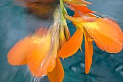 Bird of Paradise Stream (Gary Grossman) Tags: flower water beautiful oregon flora stream paradise blossom fresh birdofparadise lovely refreshing awesomeblossom water nikonflickraward qualitysurroundings waterenvirons environs adrinnesmagicalmoments
