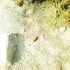 حياتنا (magd1) Tags: ، حجر نبته تربه بذره