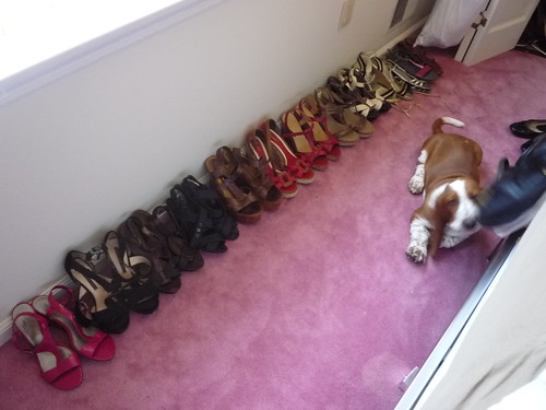 Basset Hound puppy with shoes