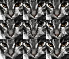 Cat512Series