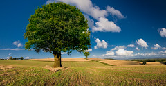 Last Tree (wentloog) Tags: uk sky panorama cloud tree wales canon eos interestingness gallery britain pano cymru cardiff explore caerdydd fields 5d frontpage wfc ptgui canoneos5d wentloog pantools welshflickrcymru stevegarrington michaelstoneyfedw