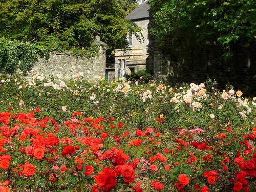 Rose Garden,Abbey Park,Leicester