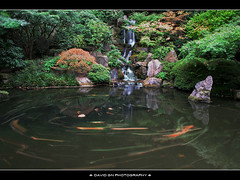 The Waterfall at Portland Japanese Garden 3 (David Gn Photography) Tags: longexposure fallleaves water oregon portland landscape waterfall pond rocks zen pacificnorthwest pdx portlandjapanesegarden washingtonpark nofish japanesemapletree canonefs1855mmf3556 canoneosrebelt1i shotthiswithmykitlens