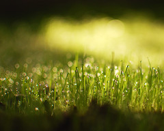 Grasskeh (Eric M Martin) Tags: grass 35mm nikon dof bokeh shallowdof d40 nikond40 assignment52 35mmf18g assignment52422009