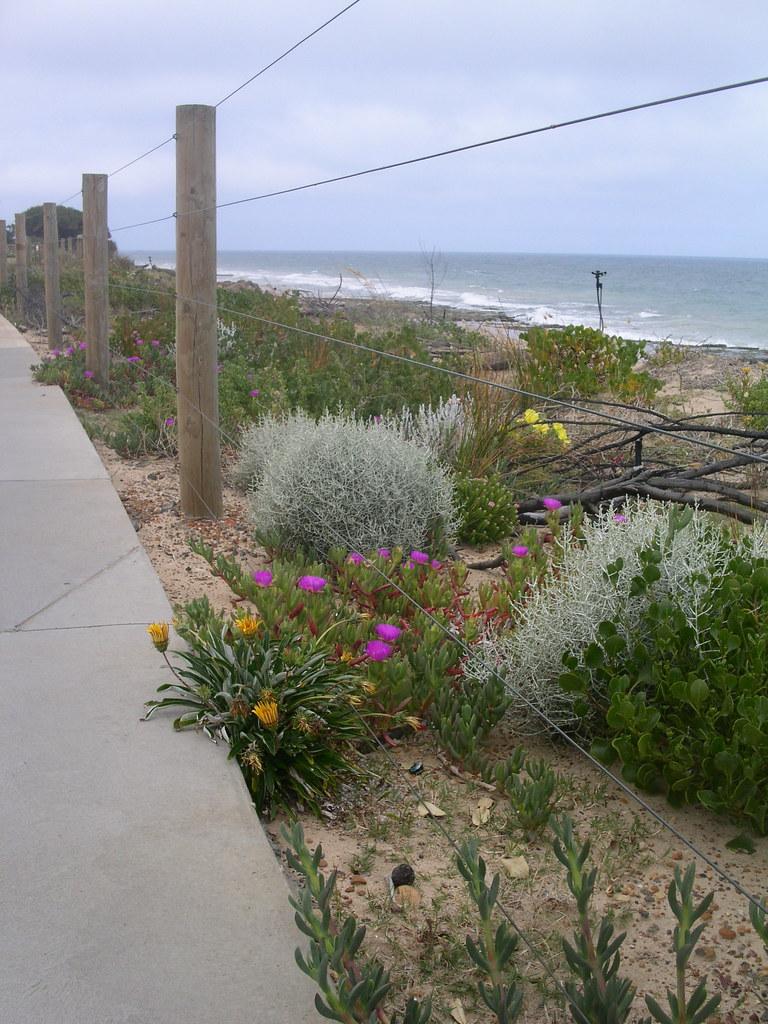 Beach flowers 9