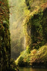 Anticipation of Beauty Around the Corner (Darrell Wyatt) Tags: water moss waterfalls primevalforestgroups pfmoss pfwaterfall pfparadise